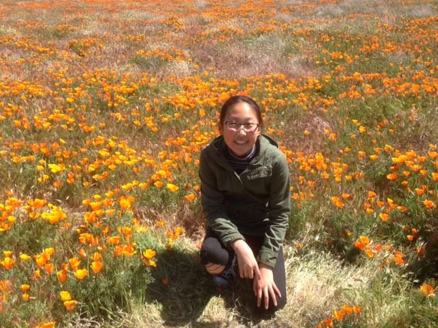 California+Poppies+are+in+bloom+at+the+Antelope+Valley+Poppy+Reserve.
