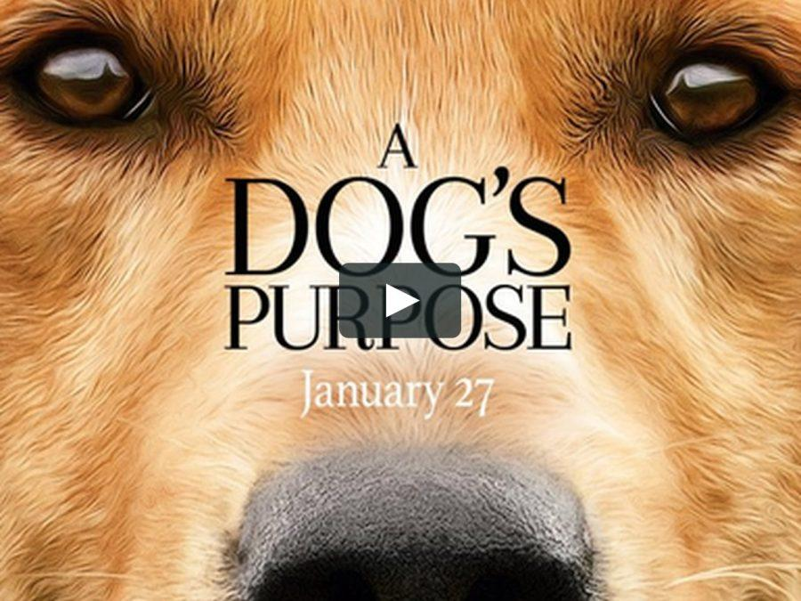 A+Dog%27s+Purpose+came+out+on+January+27%2C+2017.