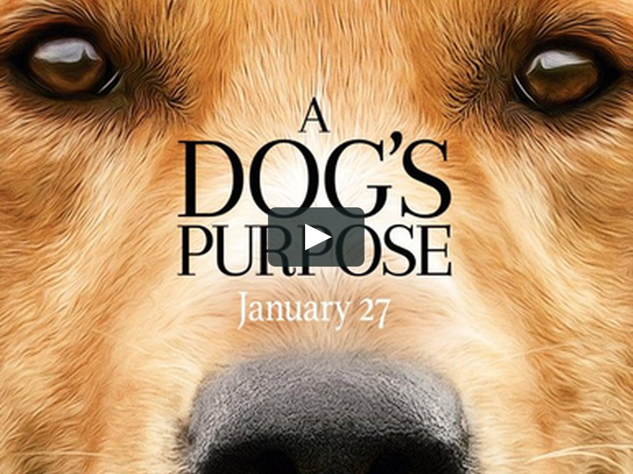 A Dog's Purpose came out on January 27, 2017.